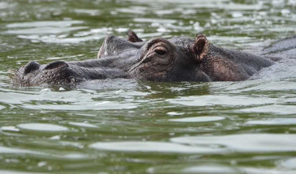animals from uganda-pictures by albi