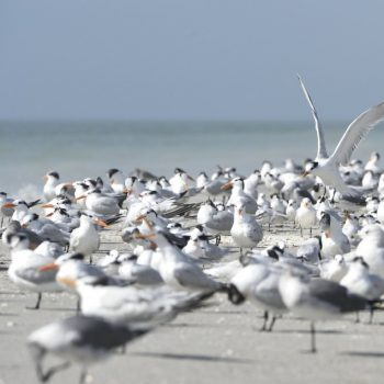 sanibel island- from miami to new orleans