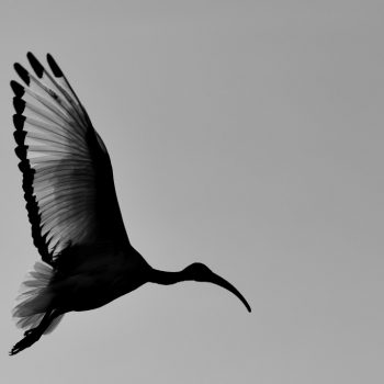 birds in the afternoon-ethiopia: pictures by albi with nikon camera