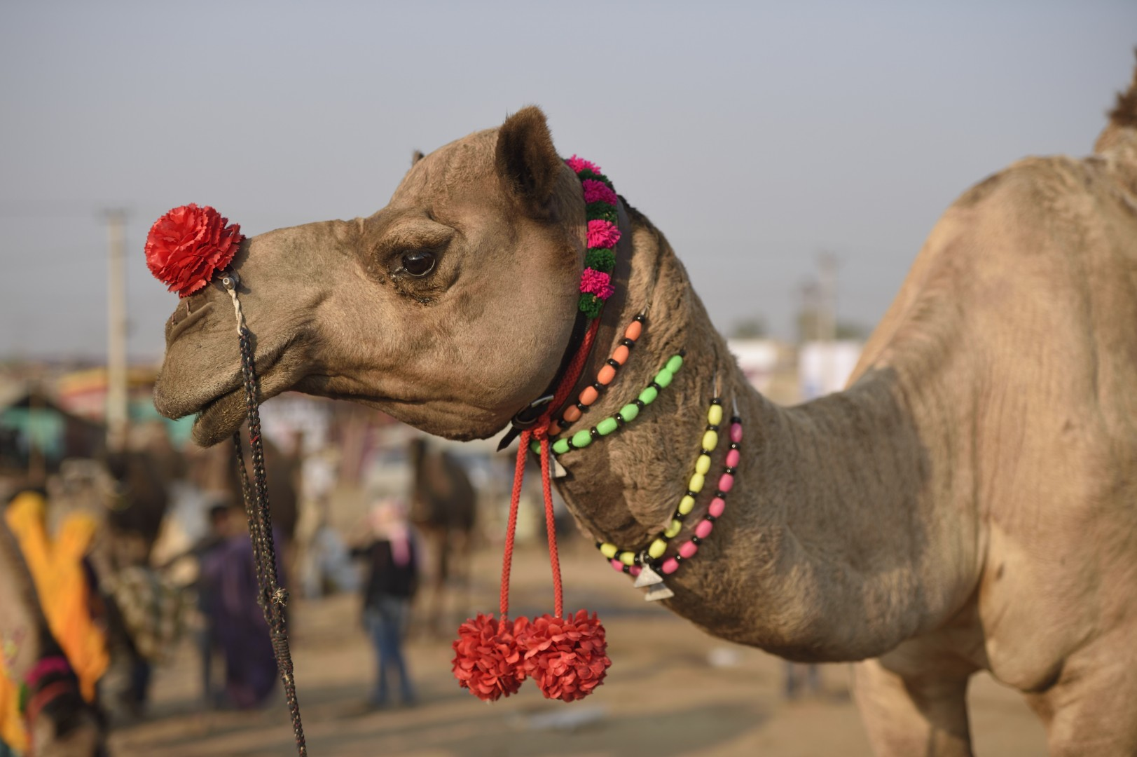 happy bling-bling 2016 from india