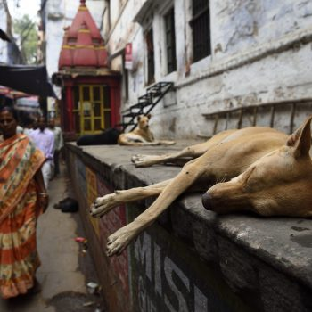 living india: dogs everywhere