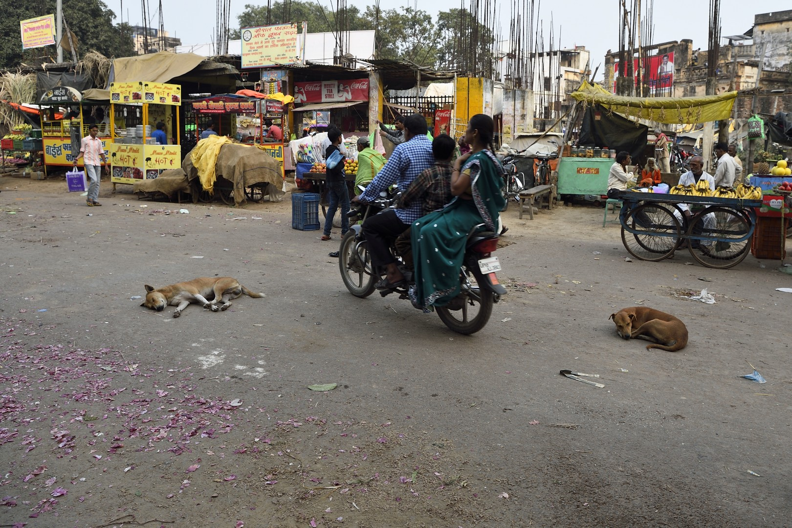 living india, feeling save the dogs are sleeping, they don't care