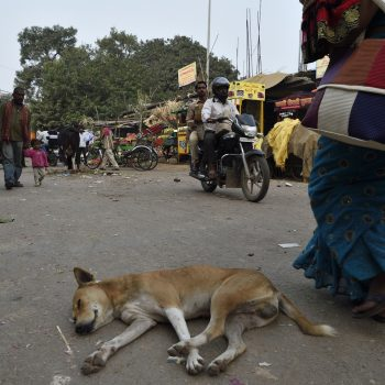 snapshots from india-do not disturb:i am sleeping