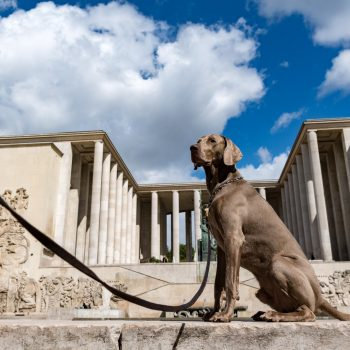 a german dog, palais de tokyo-summertime in paris - pictures by albi
