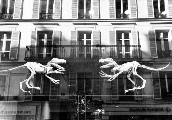 safari à paris